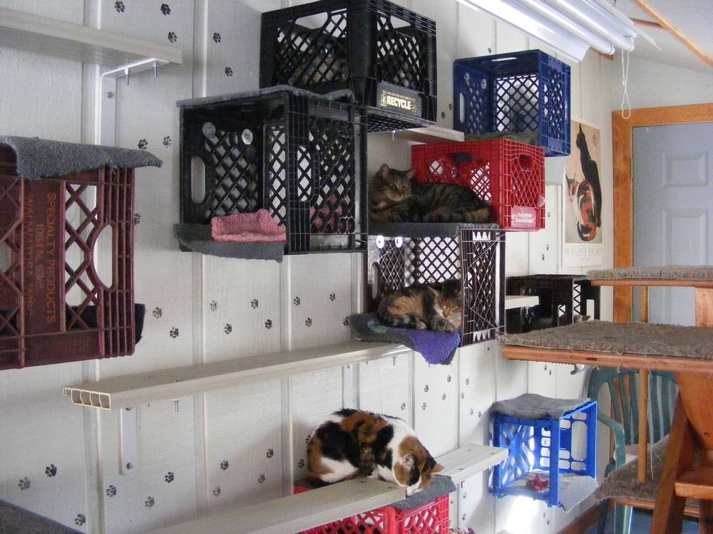 kattenkamer krabpaal