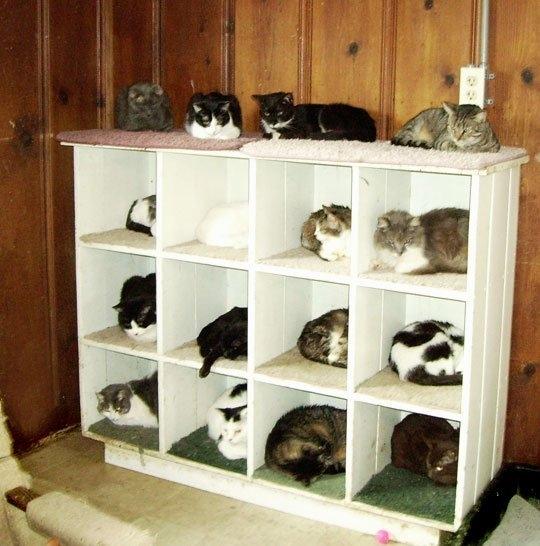 Kattenkamer maken krabpaal kopen tot 70 korting op katten krabpalen - Planken maken in een kast ...